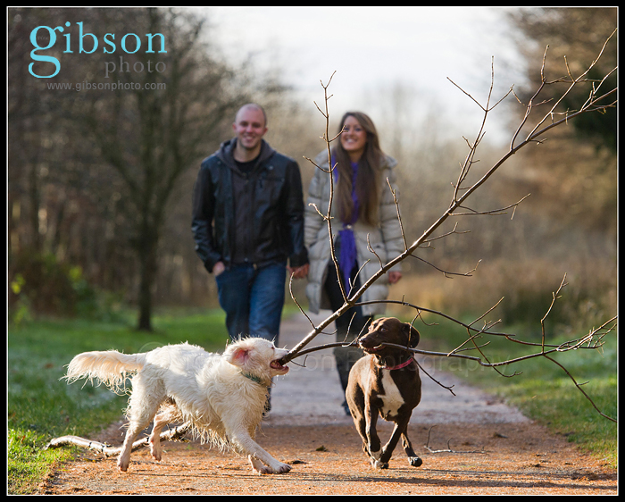 Ayrshire Pet Photographer