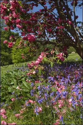 Photographer Blair Estate, Beautiful flower photographs
