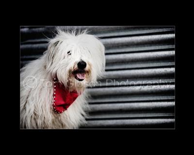 Pet Photographer Ayrshire, MPA Scotland Award of Merit Animal and Pets