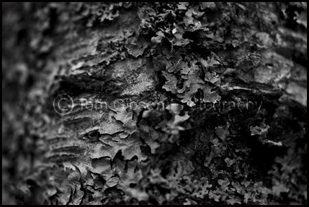 Landscape Photograph Glenshee